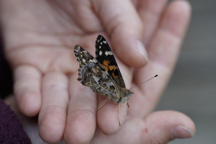 butterfly-758007_640